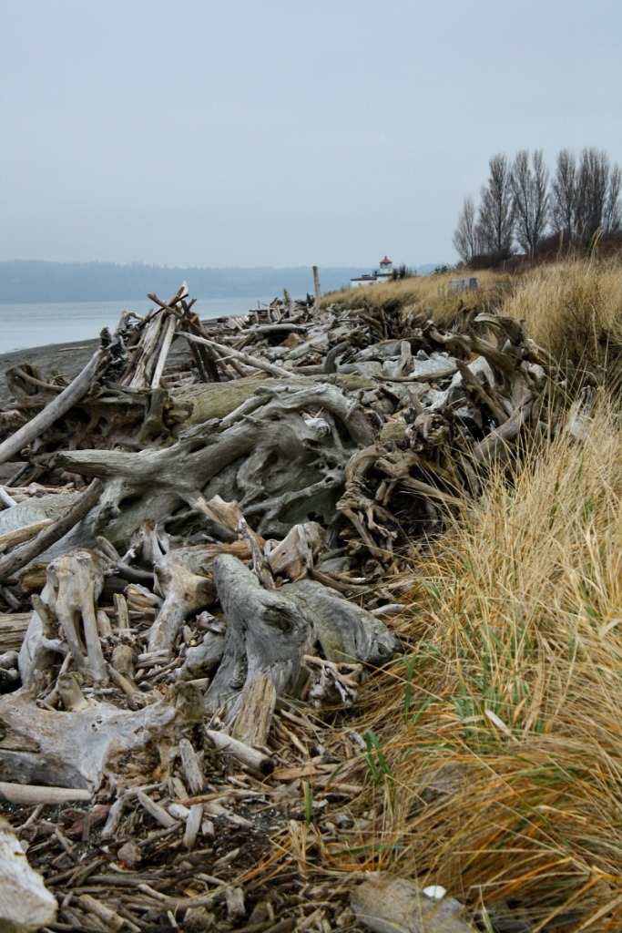 Discovery Park 4