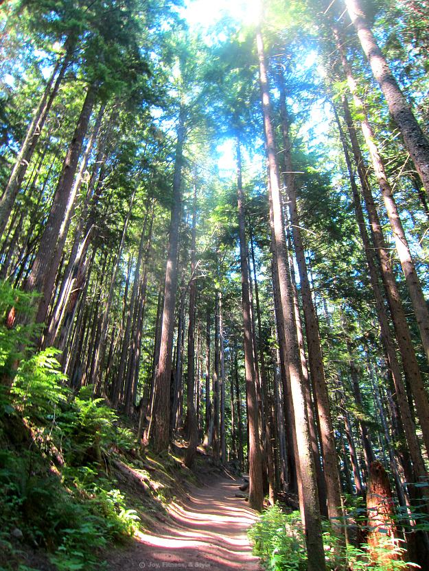 West Tiger 3 Trail 2