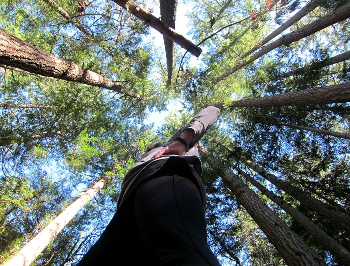 fitbit hiking