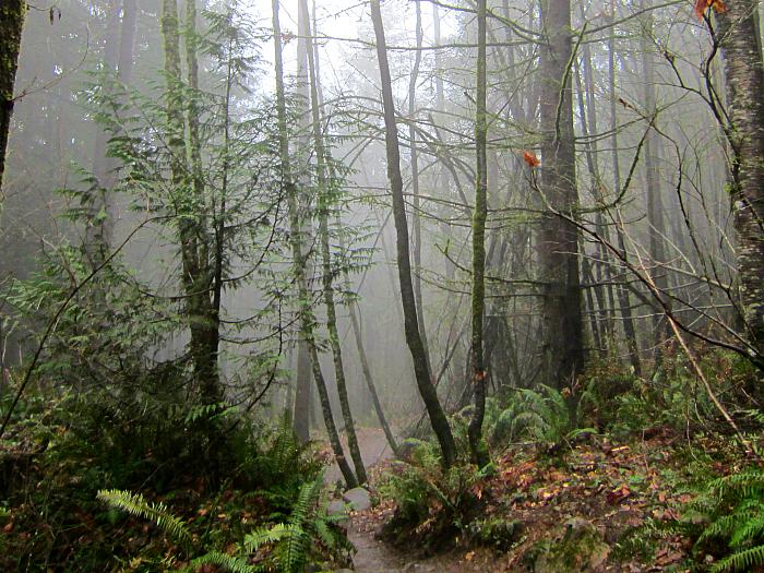Chirico Trail 3