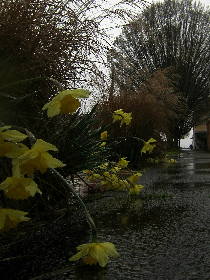 Alki Rainy Day