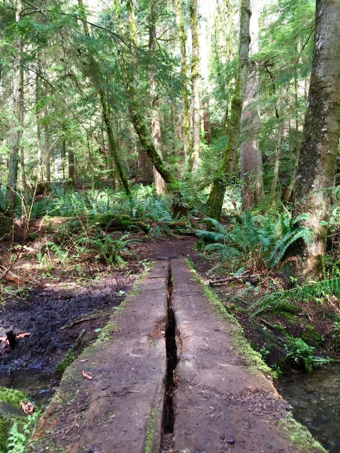 Jim Whittaker Wilderness Peak Trail