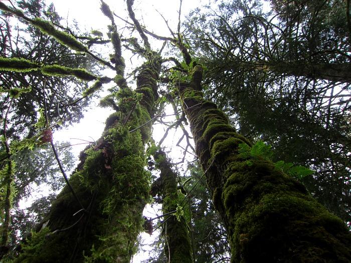 Pretzel Tree Trail 2