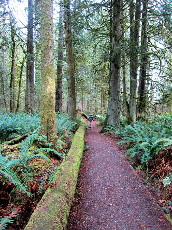 Pretzel Tree Trail 3