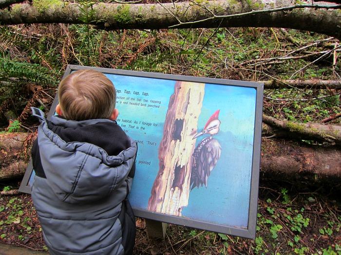 Pretzel Tree Trail Story