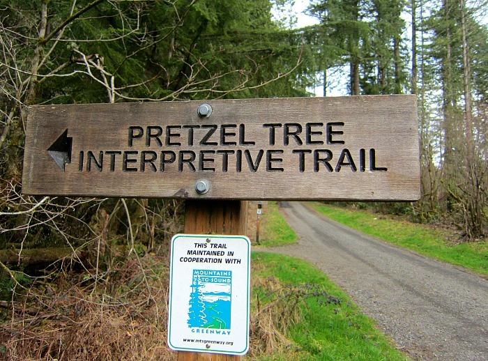 Pretzel Tree Trail