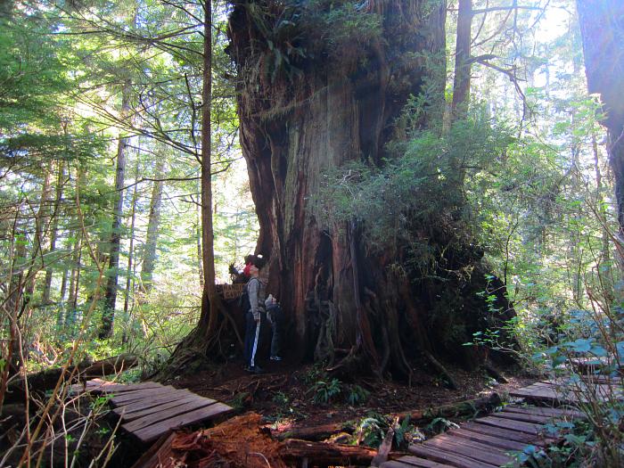 Big Trees Hanging Garden