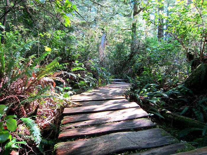 Big Trees Trail Boardwalk